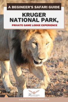 Get the complete guide to staying in a private game lodge and going on a safari in Kruger National Park. The perfect place for a first time African safari is in Kruger National Park in South Africa. Find the best Kruger National Park lodges and a complete guide to taking a South African safari. Get a complete guide full of African safari tips including exactly what to expect on your Kruger National Park safari. African safari photography | Kruger National Park South Africa | South Africa… Kruger National Park Safari, National Park Lodges, National Parks, Travel Essentials, Travel Tips, Game Lodge, Private Games, Game Reserve, African Safari