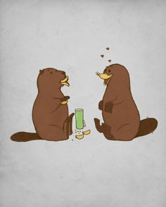 How a beaver flirts with a platypus! Too cute.