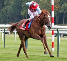 Few international horses are as popular in Melbourne as @EdDunlopRacing #MelbourneCup entrant Red Cadeaux