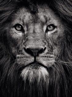 lion tattoo #tattoosmen'ssleeves