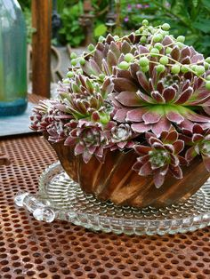 Sempervivums in bundt pan on a cake plate.  Never thought of this before, but I like it!  Maybe place it on a vintage tablecloth...