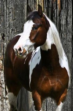 Brown and white horse.
