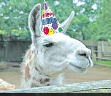 Birthday Party Planner! #kidsonthecape #capecod #kids