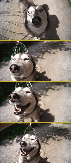 개에게 머리마사지 해줬더니.gif