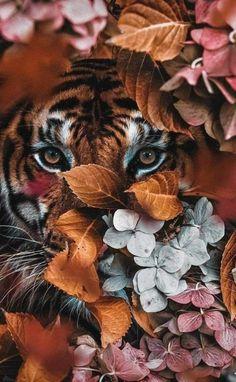 Tier Wallpaper, Iphone Background Wallpaper, Animal Wallpaper, Aesthetic Iphone Wallpaper, Aesthetic Wallpapers, Nature Animals, Animals And Pets, Cute Animals, Most Beautiful Animals