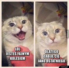 Znalezione obrazy dla zapytania koty memy