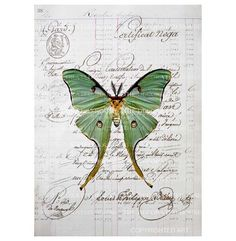 Gorgeous Butterfly print by TheDecoratedHouse