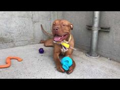 Toby A1114507 Nycacc org   IMG 2225 - YouTube