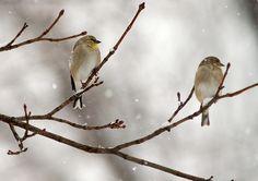 Wintery birds.