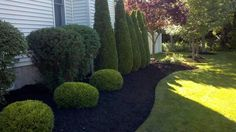 This garden really looks great with black mulch. No need to worry about fading when you use our premium rubber mulch with long lasting colors. Black Rubber Mulch, Black Mulch, Landscaping Around Deck, Mulch Landscaping, Landscaping Ideas, Garden Shrubs, Lawn And Garden, Tree Mulch, Tall Plants