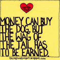 Money can buy the dog, but the wag of the tail has to be earned. True for animals and humans. All Dogs, I Love Dogs, Puppy Love, Cute Dogs, Schnauzers, Dachshunds, Westies, Animal Quotes, Dog Quotes