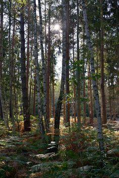 Think, woodlands antebellum swinger are