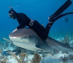 danse avec les requins                                                                                                                                                                                 Plus