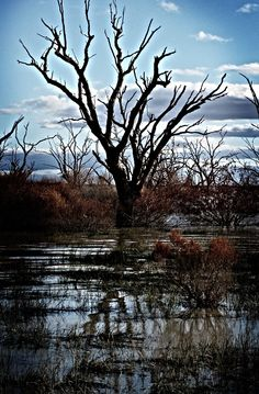 Menindee Lakes - Menindee Lakes, New South Wales- Australia