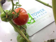 Tower Garden (@TowerGarden) | Twitter