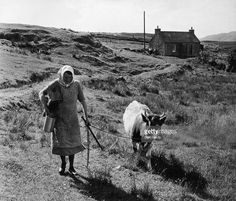 A woman leads her cow along a remote country track on the island of Lewis and Harris in the Outer Hebrides, 3rd September 1955. She is also carrying a bucket and a milking stool. Original publication: Picture Post - 7967 - The Crofters' Isle - pub. 1955