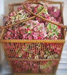 Hortensia Hydrangea, Hydrangea Garden, Pink Hydrangea, White Hydrangeas, Love Flowers, My Flower, Dried Flowers, Beautiful Flowers, Beautiful Things
