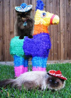 The cats who plan to use their claws on this piñata. | 14 Cats Who Are So Totally Celebrating Cinco DeGato