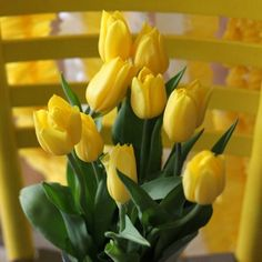 Yellow tulips remind me of my mother who was often hospitalized during her life. I remember yellow tulips in bloom in the borders of the gardens of the hospitals where she stayed. Funny, how that memory sticks with me so many years later. My Flower, Fresh Flowers, Spring Flowers, Beautiful Flowers, Ikebana, Design Floral, Yellow Tulips, Orange Flowers, Third Birthday