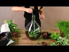 Plant Terrarium by Esschert Design Bottle Terrarium, Bottle Garden, Terrarium Diy, Plants In Bottles, Glass Bottles, Glass Vase, Forest Plants, How To Make Terrariums, Esschert Design