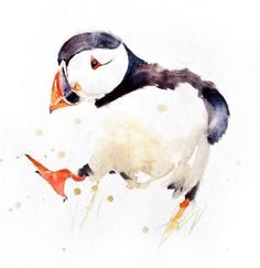 Contemporary print of my original watercolour painting PUFFIN 6 Printed using epson Chroma K3 pigments on archival 315 gsm paper.