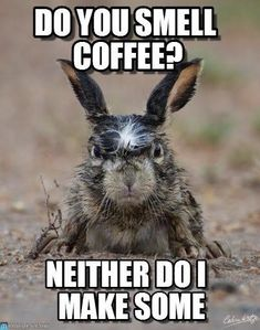 do you smell coffee? Angry Hare meme - Cast your vote, share, discuss and browse similar memes Funny Signs, Funny Memes, Hilarious, Jokes, Memes Humor, Coffee Is Life, I Love Coffee, Coffee Girl, Coffee Coffee