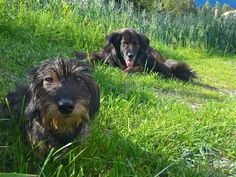 urlaub mit hund #holiday with dog Dogs, Animals, Environment, Artworks, Animales, Animaux, Pet Dogs, Doggies, Animal