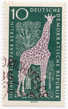 German Giraffe