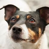 Are Animals Affected by Migraine Headaches Like People Are | petMD