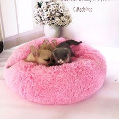 Chat Donut, Canis, Round Dog Bed, Dog Weight, Cockerspaniel, Bed Mats, Cat Dog, Sleeping Dogs, Medium Dogs