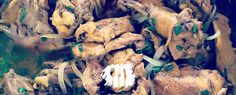 Já experimentou usar açafrão no frango? Veja a receita http://fabiolenza.com.br/?p=2205