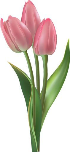 Clip Art For The Spring Season: Pink Tulips . - world of flowers Pink Tulips, Tulips Flowers, Daffodils, Beautiful Flowers, Deco Floral, Arte Floral, Flower Images, Flower Art, Watercolor Flowers