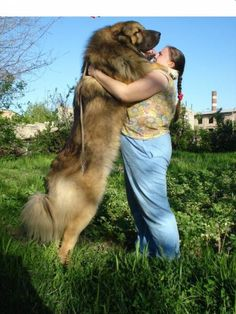 5 Biggest Dogs You have Ever Seen ~ The Pet's Smarty Huge Dog Breeds, Huge Dogs, Giant Dogs, Russian Dog Breeds, Russian Bear Dog, Russian Caucasian, Caucasian Shepherd Dog, Chinese Dog, Stop Dog Barking