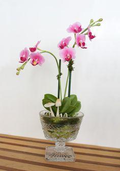 Mini Pink Moth Orchid Flower Arrangement in Crystal Ice Cream Bowl - Terrarium Plant
