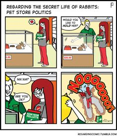 The next few weeks will chronicle an all-too-familiar story regarding pet store rabbits. (To buy, or not to buy … that is the question). This is PET STORE POLITICS or WASH, RINSE, REPEAT.