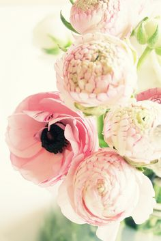 anemones and peonies. I'll swoon. Fresh flowers make my life. #podpastels