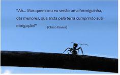(CHICO XAVIER)