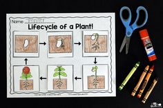 Engage your class in an exciting hands-on experience learning all about plants! Plants Unit (PowerPoint, Lessons, Printables) is perfect for classrooms! Kindergarten Units, Kindergarten Activities, Science Activities, Sequencing Activities, Autism Activities, Toddler Activities, Maria Montessori, Tiny Seed Activities, Plant Lessons