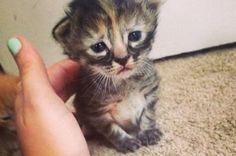 O gatinho Purrmanently Sad Cat,que nasceu em uma recente ninhada, tem ganhado fama na web. O motivo: sua cara de triste.