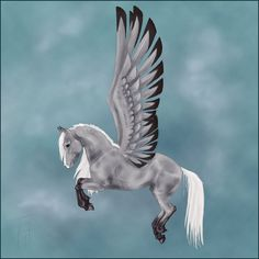 pegasus | Grey Pegasus by blackseagull on deviantART