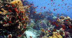 Unterwasserwelt am Korallenriff am Roten Meer, Sharm-el-Sheik/Ägypten © 2014 Constantin Film Verleih GmbH