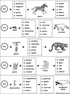 Worksheet - Food Web Worksheets For High School Food Chains Science With