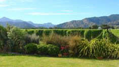 Imagine a vineyard in your backyard–is this what it looks like? It would if you lived in Marlborough, New Zealand, where the wines are intense and elegant. Try Sauvignon Blanc from this region for a mouthful of passion fruit, lime and grapefruit. New Zealand Wine, Sauvignon Blanc, Spotlight, Vineyard, Wanderlust, Backyard, Bar, World, Travel