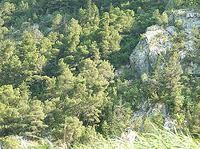 Bosque mediterráneo