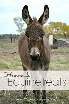 How to Make Horse Treats, perfect for any kind of equine and goats love them too!