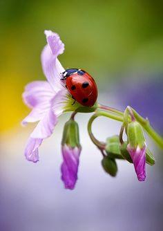 Ladybird   Flickr - Photo Sharing!
