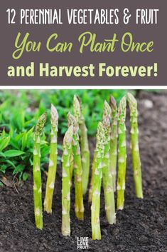 Perennial vegetables - crops you can plant once, and harvest year after year - are relatively rare in the plant food world, but save you tonnes of money! Perennial Vegetables, Growing Vegetables, Fall Planting Vegetables, When To Plant Vegetables, Veggies, Backyard Vegetable Gardens, Garden Plants, Potted Plants, Gardening For Beginners