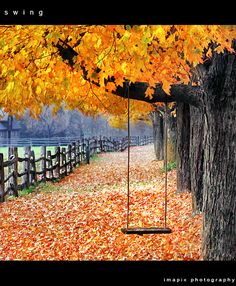 Autumn. I would love to sing in this swing and jump into the crunchy leaves AHHHH.....