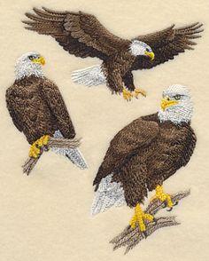 Bald Eagle Collage