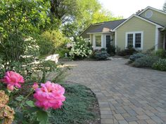 Roses and stone driveway
